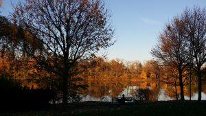 Trees 2 - Delaware Park Nov 2016