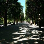 Trees 3 - Jardin de Palais Royale Paris May 2017